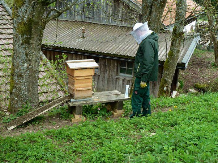 Bienen-Warre