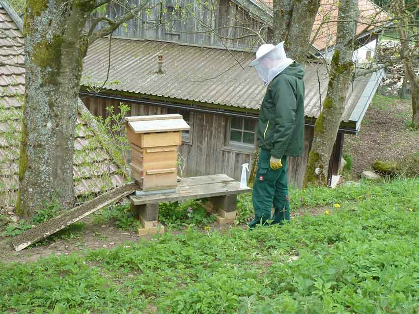 Bienen1-web
